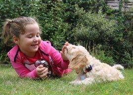 Ce învață copiii atunci când au un câine