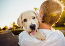 Glume despre câței