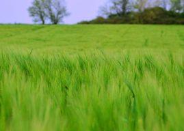 Ce trebuie să știi despre cele mai grave probleme de mediu