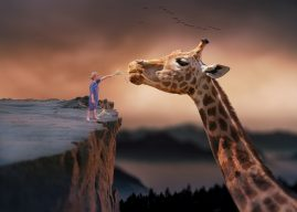 Curiozități despre girafe