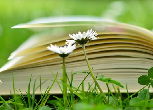 Citate despre educație