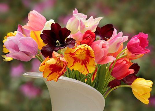 O floare pe zi