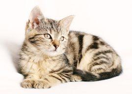 12 întrebări despre animale. Testează-ți cunoștințele!