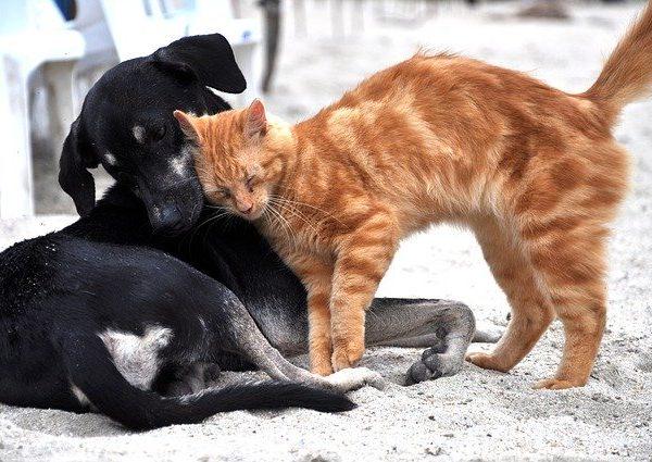 12 ghicitori despre animalele domestice