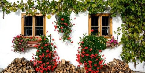 O lecție despre efort și rezultate: Florile de pe partea cealaltă a zidului