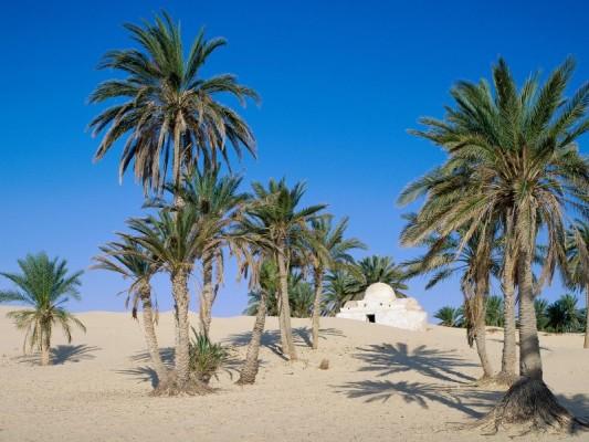 Sahara_2.jpg