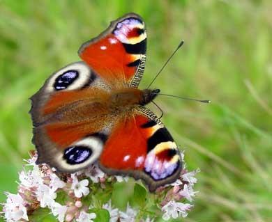 buterfly1.jpg