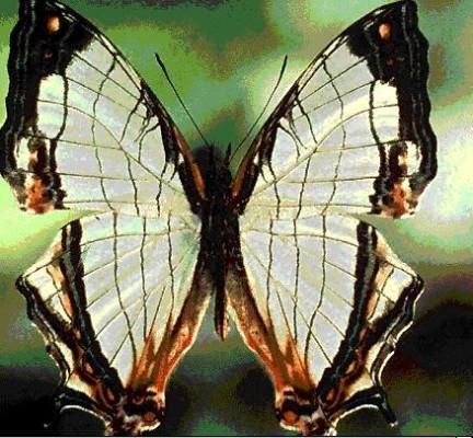 buterfly3.JPG
