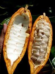 cacao4.jpeg