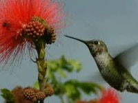 colibri4.jpg
