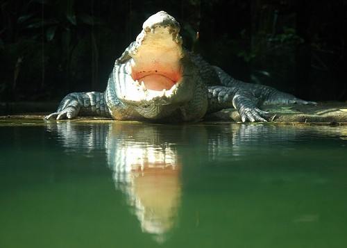 crocodil_2.jpg