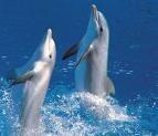 delfini4.jpg