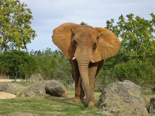 elefant_1.jpg