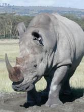 rinocer1.jpg
