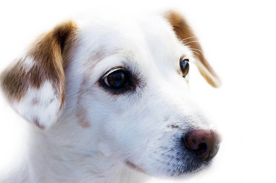 citate caini Citate despre câini | AniDeȘcoală.ro citate caini